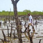 Reconstitution of mangroves on 2500 Hectares in southern Benin