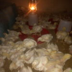 Fund my poultry farm