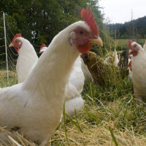 HELP ME FUND MY POULTRY FARM AND SAVE MY FAMILY FROM POVERTY in Nigeria